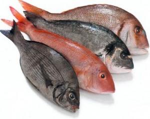 Os beneficios dos Peixes