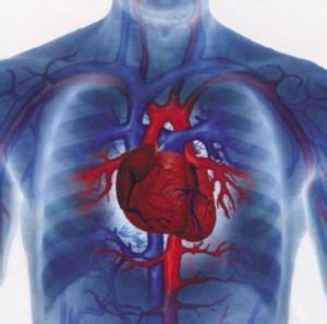 doencas cardivasculares