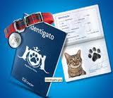 WWW.IDENTIGATO.COM.BR, PROMOÇÃO CAT CHOW IDENTIGATO