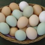 Dois ovos por dia: boa medida para perder peso?