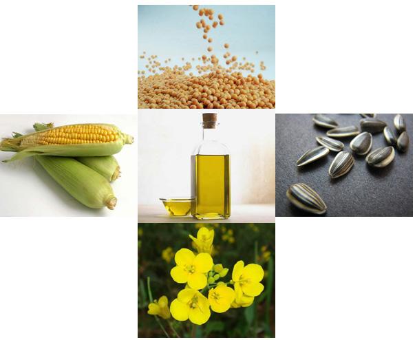 óleo soja milho girassol canola