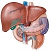 Como eliminar a gordura no fígado
